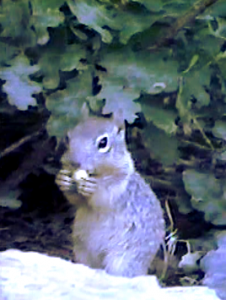 GrandCanyon-squirrel00-a