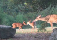 New fawns are always a pleasure to find.
