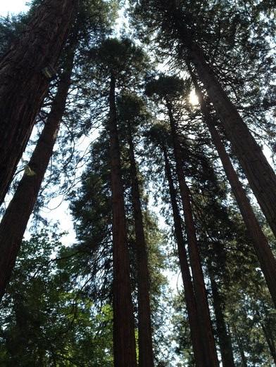 Yosemite055
