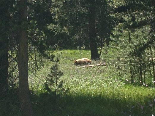 Yosemite068