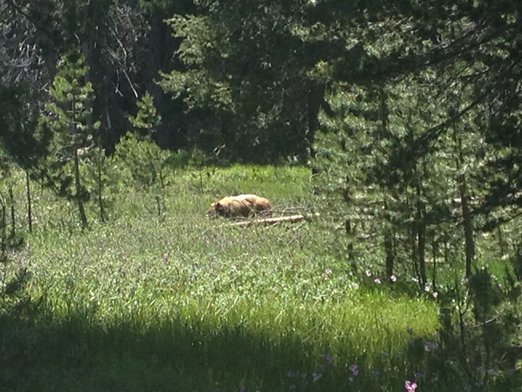 Yosemite070