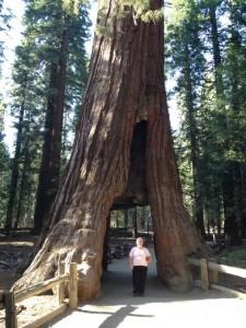Yosemite140