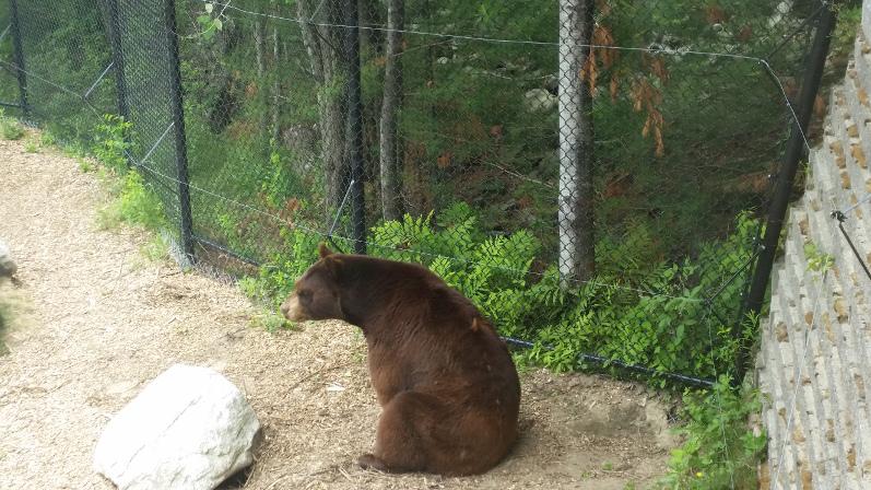 Bear Exhibit