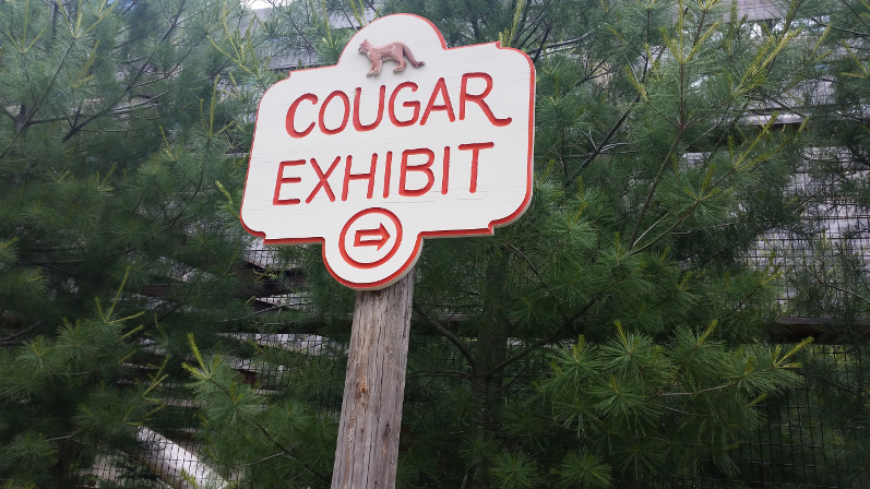 Cougar Exhibit