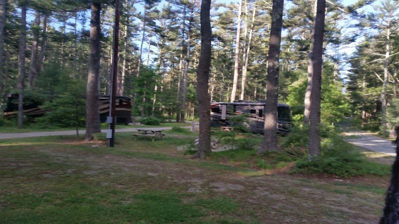PineWood-Neighbor-Site