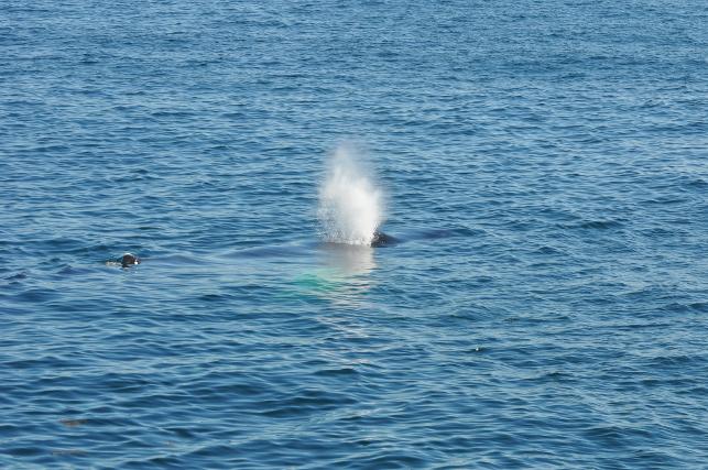 whale-spray1