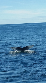 whale-tail-38