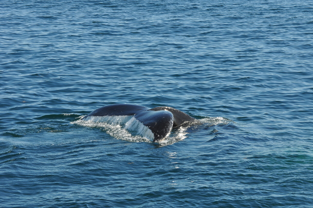 whale-tail6