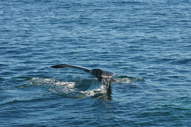 whale-tail8